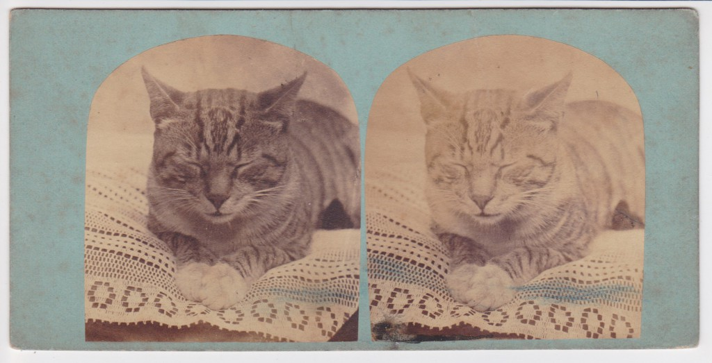 Stereoview - Cat