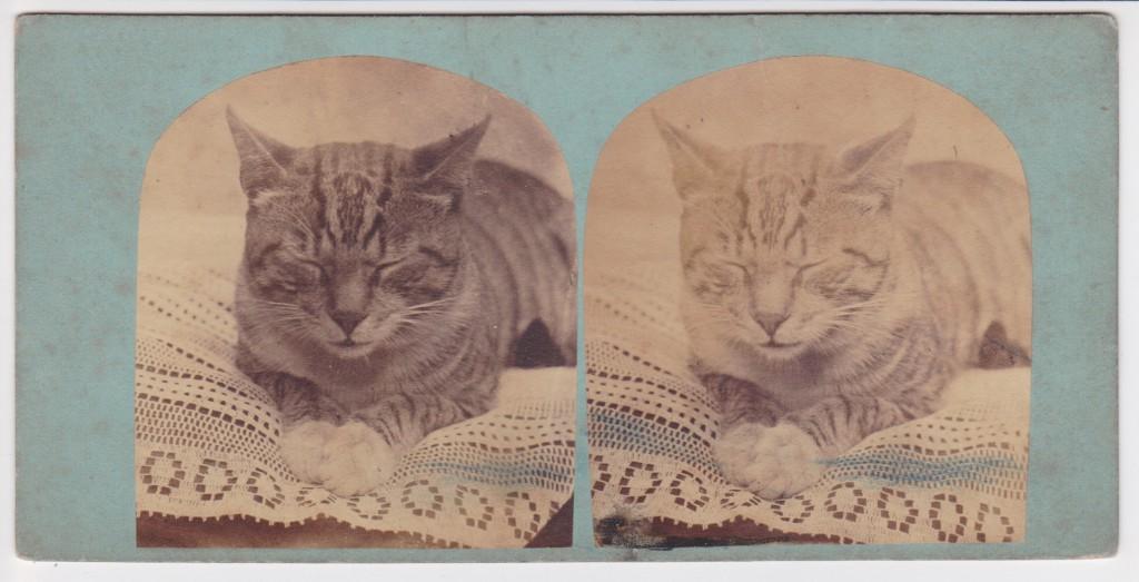 Stereoview - Cat