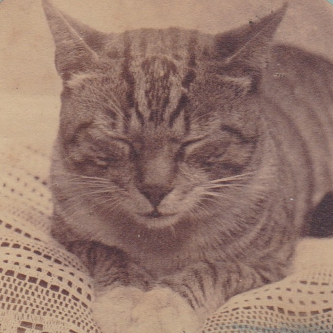 Stereoview - Cat square